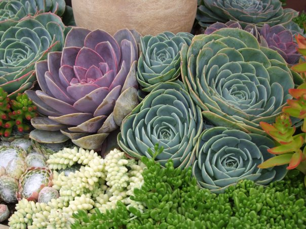 Succulent Nursery Southern California Thenurseries
